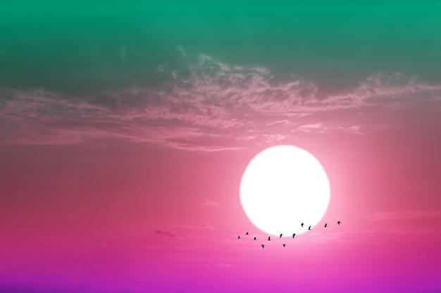 空の紫色のパステルカラーの雲と家に飛んでいるシルエットの鳥の夕焼けにクローズアップ