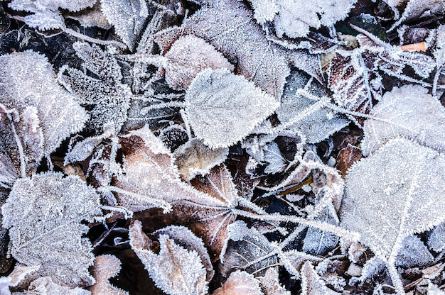 Close up top view of fallen autumn leaves covered with ice crystals
