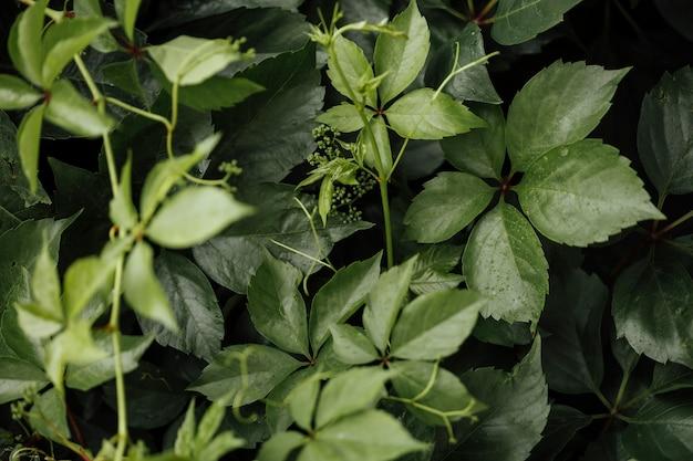クローズアップトップビュー草原植物 無料写真