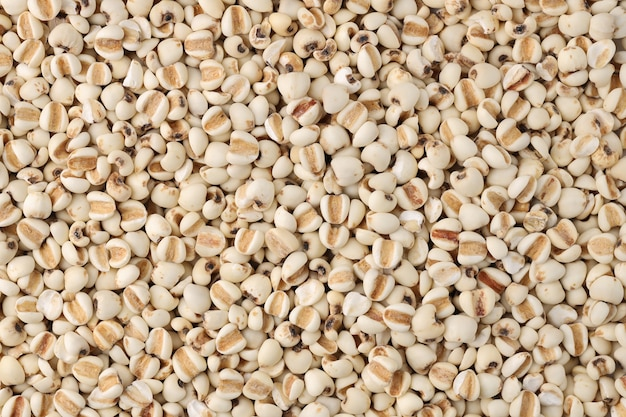 Close up top view jobs tear adlay millet or pearl millet background