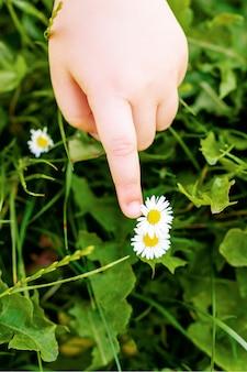 Крупным планом вид сверху руки маленького ребенка, касающейся белых маргариток в траве.