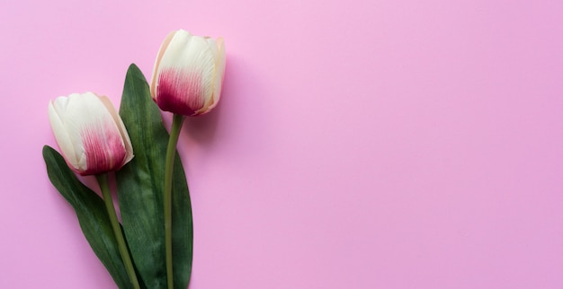핑크에 튤립 꽃의 상위 뷰를 닫습니다 프리미엄 사진