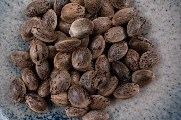 Крупным планом вид неочищенных семян конопли в круглой миске, изолированные на фоне семян марихуаны