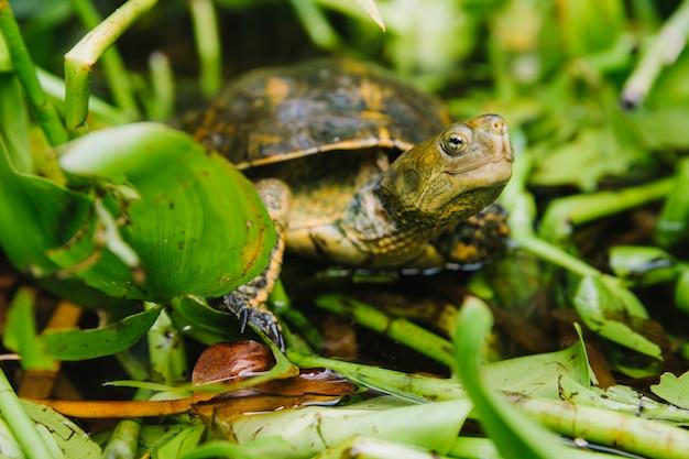 Close-up of tortoise on pond