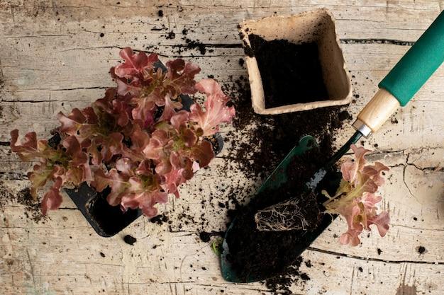 Primo piano sul processo di trapianto delle piante