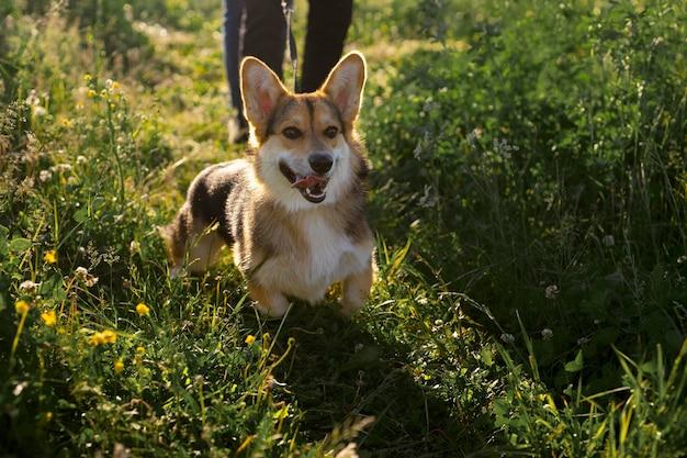 犬と一緒に旅行者をクローズアップ
