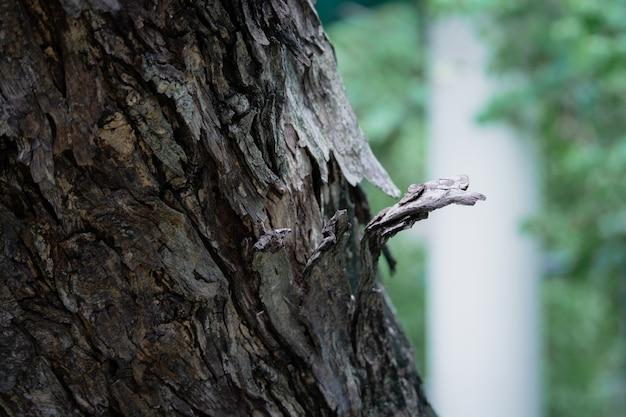 열대 아몬드 또는 인도 아몬드의 질감이 있는 나무 흐릿한 배경으로 나무 껍질을 닫습니다