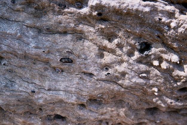 Текстура коры дерева крупным планом как деревянный фон