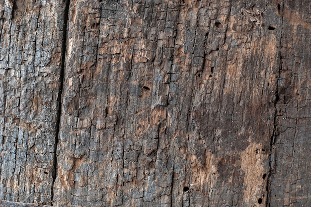 Close up on tree bark texture details