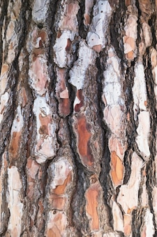 クローズアップ、樹皮質