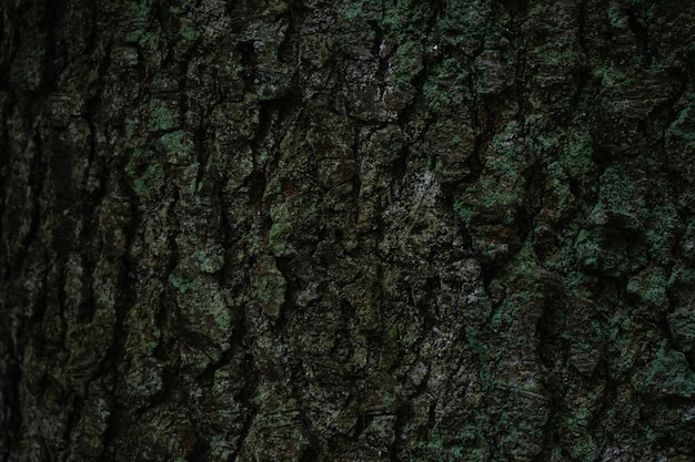 Close-up of a tree bark with moss