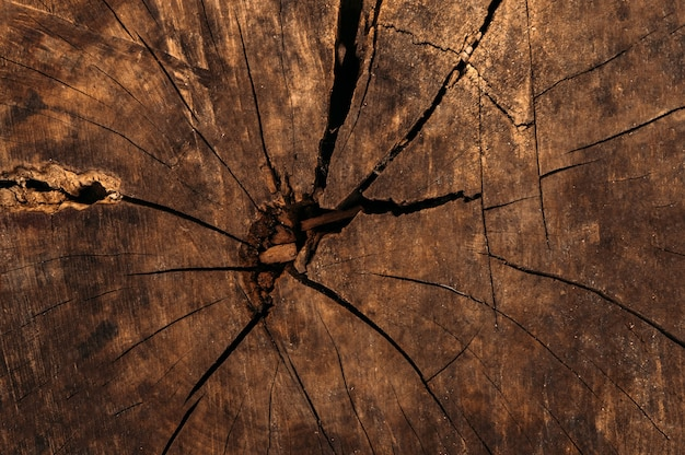 Close up of a tree stump in a cut texture background