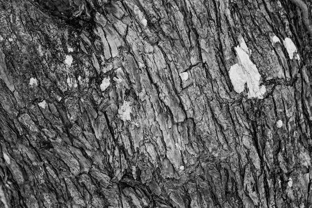 Close up tree texture
