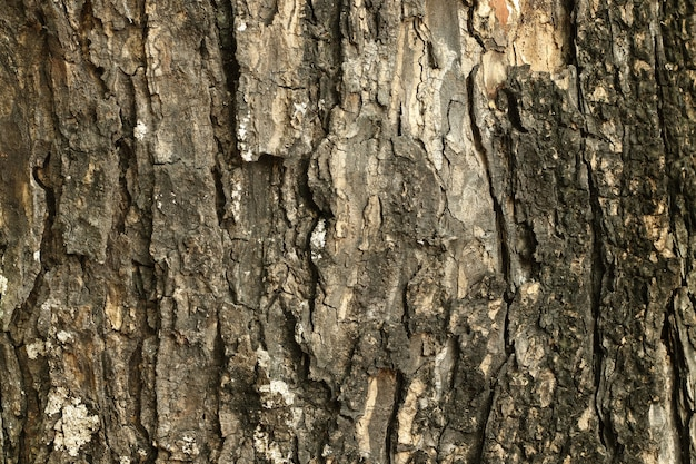 Close up of tree trunk in the forest