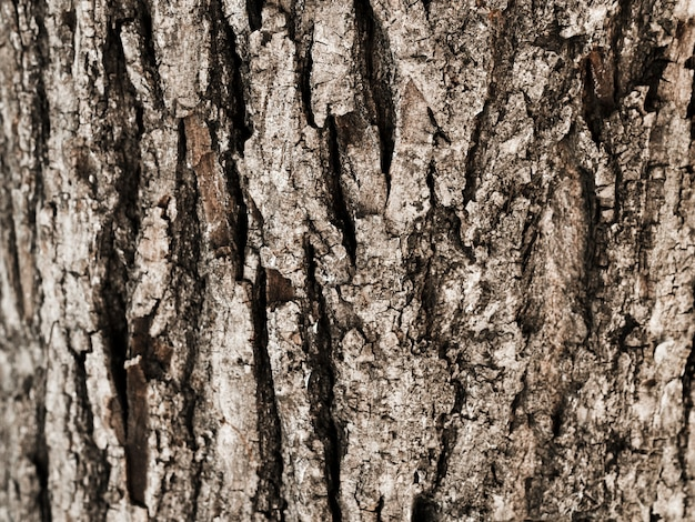 Close-up of tree trunk textured
