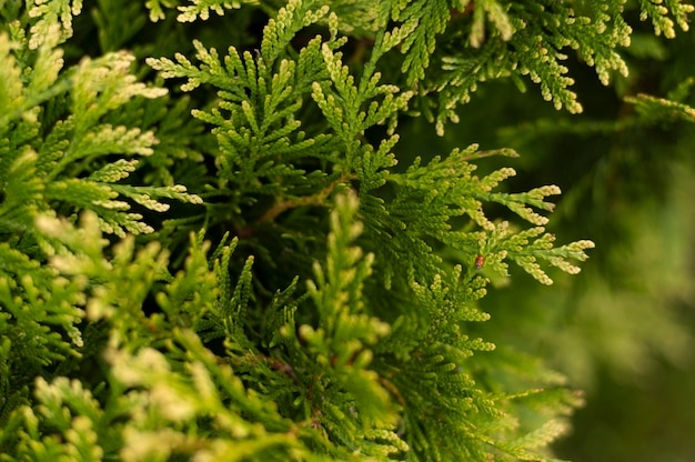 Листья деревьев крупным планом