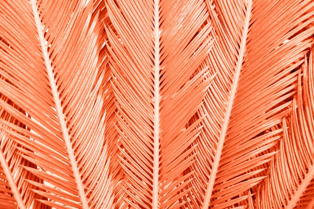 Close-up trendy coral colored tropical palm leaves background