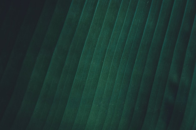 Close up tropical banana leaves texture background.