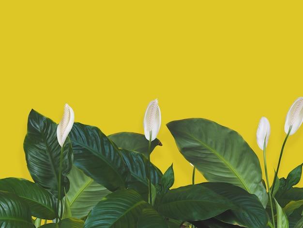 봄철을 위한 복사 공간이 있는 노란색 벽 위에 열대, 녹색 잎과 흰색 꽃을 닫습니다. 자연 배경입니다.