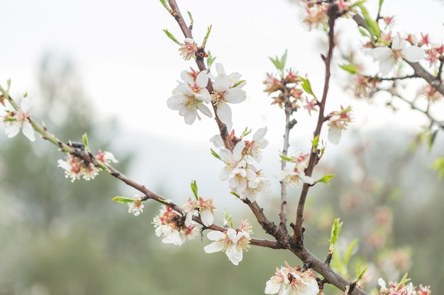 Close-up of twigs in bloom and sky background