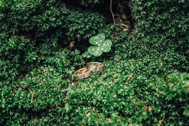 Close-up of two beautiful golden rings lie on the green moss, selective focus