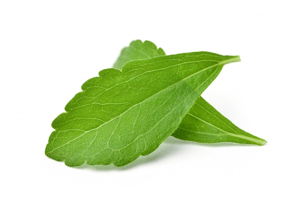 Close-up of two fresh stevia leaves isolated on white.