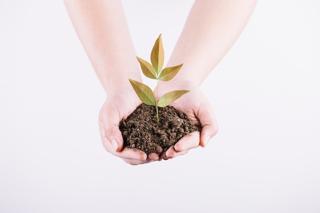 Close-up of two hands holding seedling with soil on white background