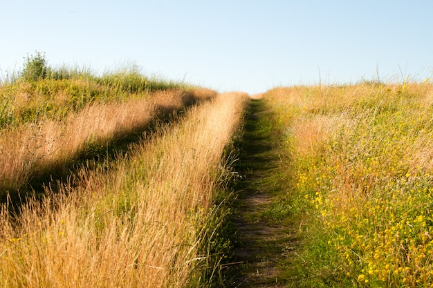 Close-up two-track dirt road in a flowering grassy meadow against a blue sky,