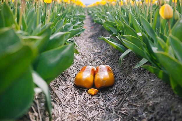 전형적인 네덜란드 국가 나막신을 닫습니다. 전통적인 네덜란드 목조 노란색 klompen 신발 노란 튤립 꽃 필드 사이의 지상에 서