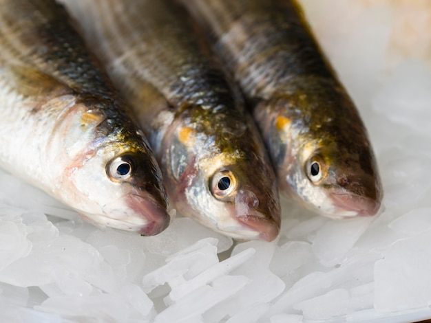 Close-up variety of mackerels on ice cubes