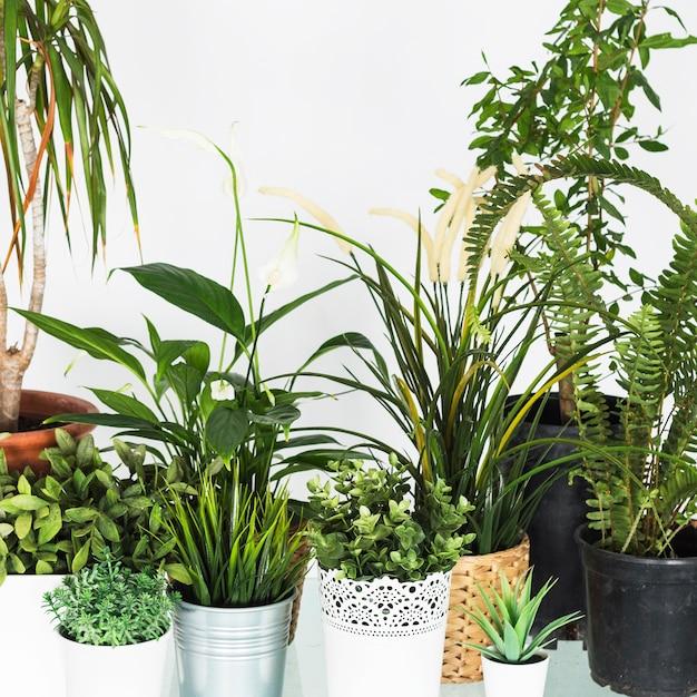 Primo piano di varie piante in vaso fresche