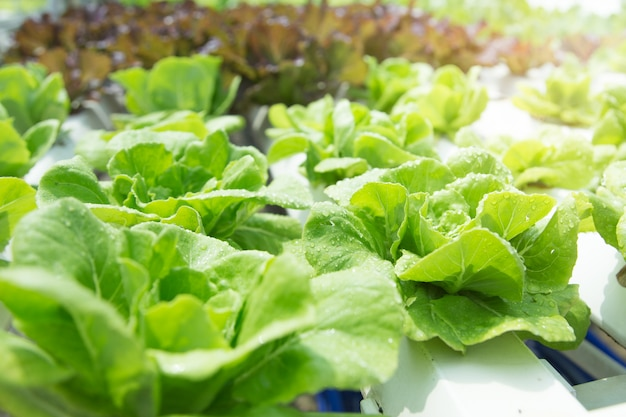 Close up in vegetable garden during morning time food background concept with copy space