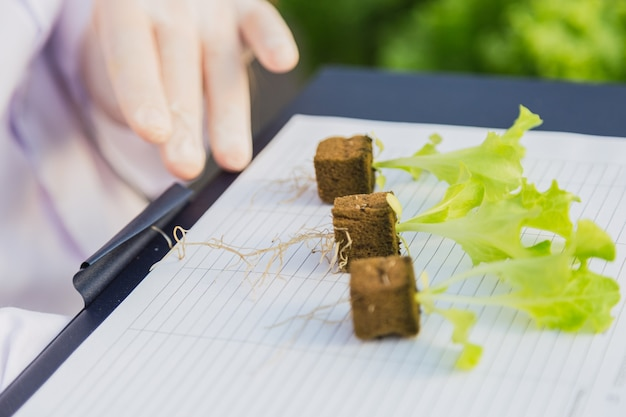 Close up vegetable seedlings on planting table in hydroponic farm