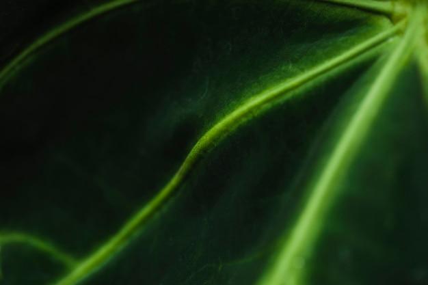 エキゾチックな葉の上のクローズアップ静脈