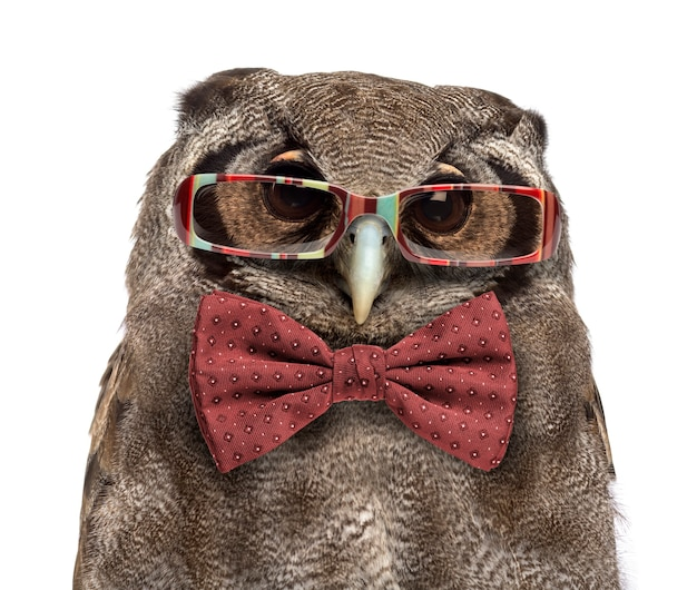 Close-up of a verreaux's eagle-owl - bubo lacteus (3 years old) wearing glasses and a bow tie in front of a white surface
