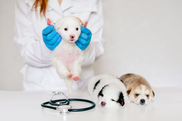 Close up on veterinarian holding a white puppy