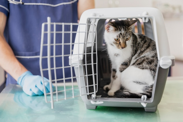 Close-up veterinarian with cat in cage
