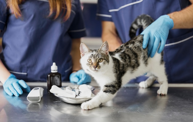 Крупный план ветеринаров с лекарством для пострадавшего кота