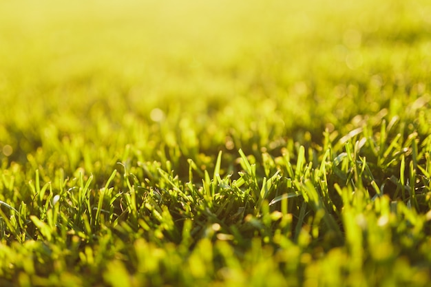 Close up vibrant spring green fresh golf grass, sunshine lawn. nature texture, green background for wallpaper. soft focus. abstract. soccer field or sports concept design.