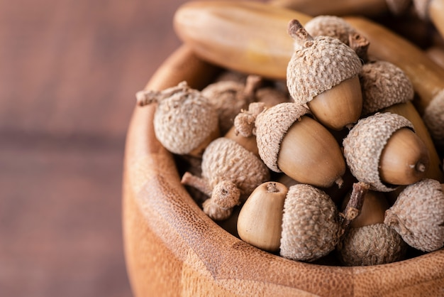 Close-up view of acorns in bowl
