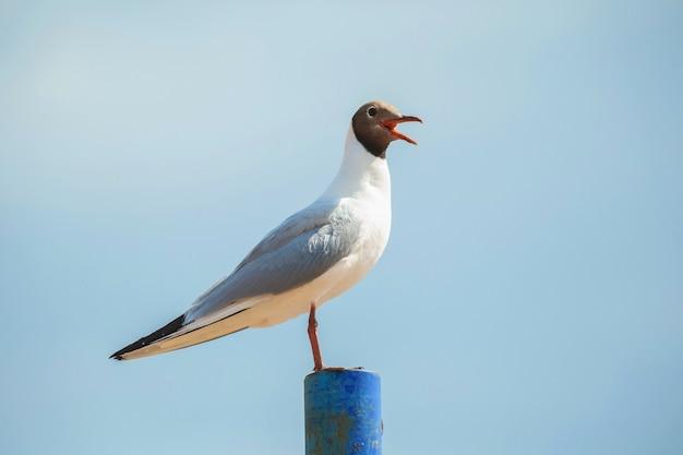 Крупным планом вид на чайку на шесте на фоне голубого неба