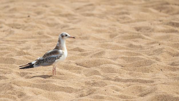 Крупным планом вид на чайку, идущую на песчаном пляже
