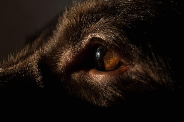 カメラを見ている目の茶色のラブラドール犬のクローズアップビュー