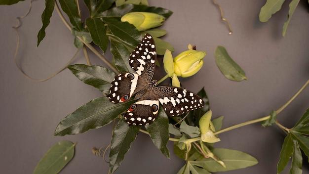 Vista ravvicinata del bellissimo concetto di farfalla