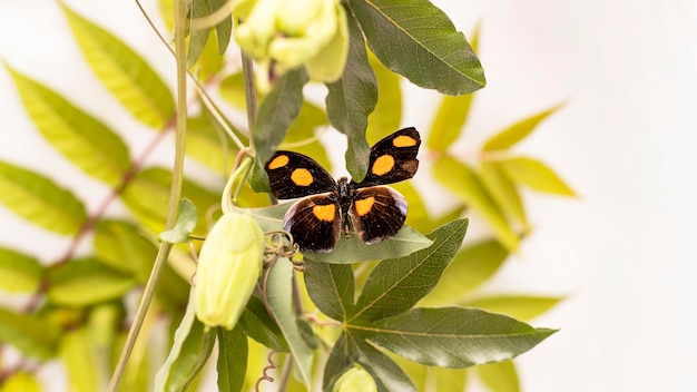 Close-up view of beautiful butterfly concept