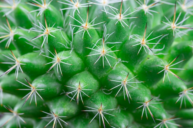 Close up view of a bright green cactus