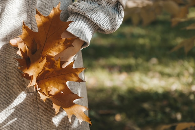 Close up view of brown oak leaves in the pocket of grey woman coat atmospheric autumn composition su...