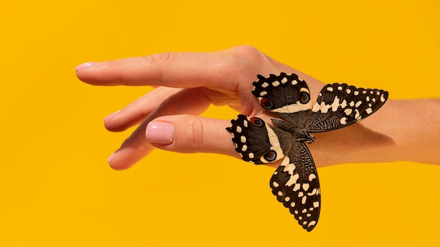 Close-up view of butterfly on hand