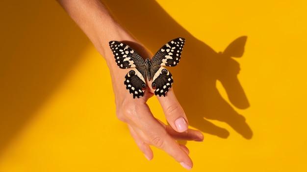 Vista ravvicinata della farfalla a portata di mano