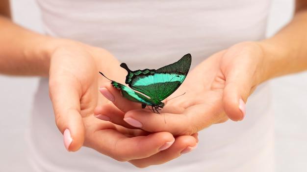 Vista ravvicinata della farfalla seduta a portata di mano
